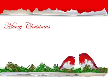 Christmas background with robin birds  Vector
