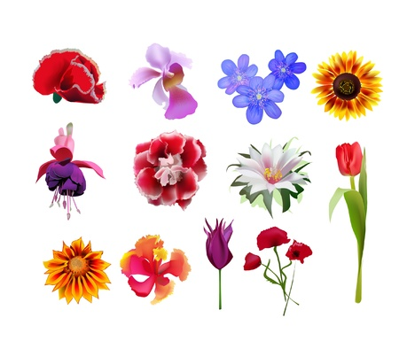 golden daisy: conjunto de flores Vectores