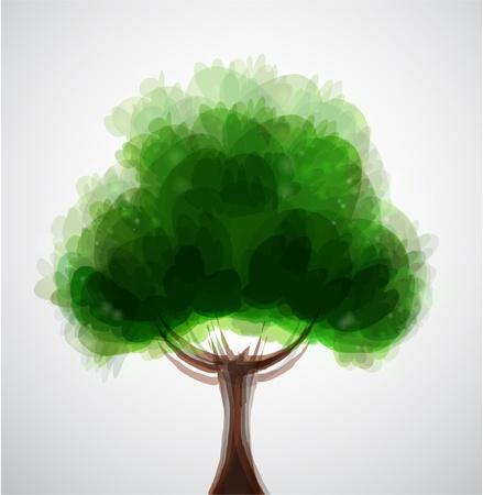 sauce: Árbol