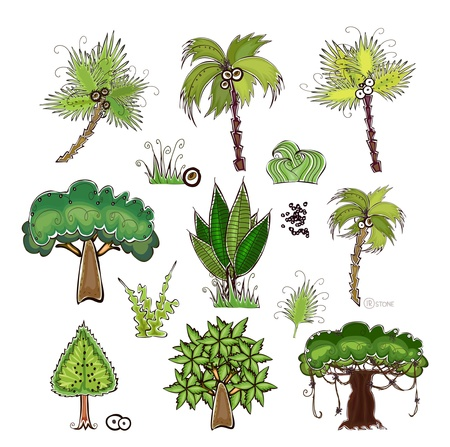 hawaii flower: palms and jungle trees