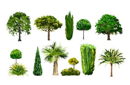 hoog gras: vecroe realistische boom en palm set