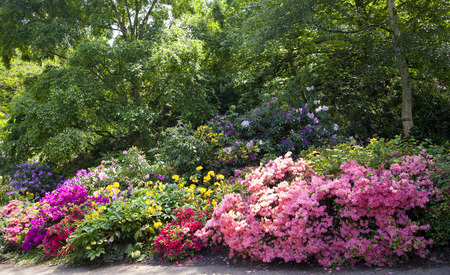 Old English park in bloom, south of London