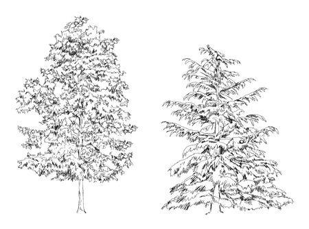 boceto: Árboles, roble, abedul, abeto, colección pine.Sketch