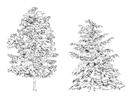 sketch: Trees, Oak, birch, fir, pine.Sketch collection