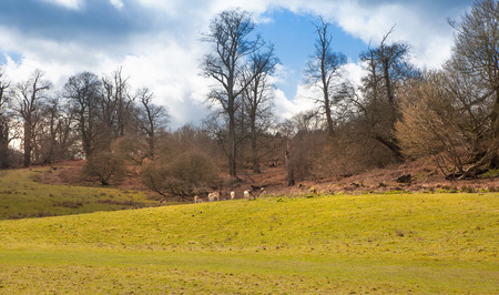 english oak: English landscape, forest and fields in spring. Sussex