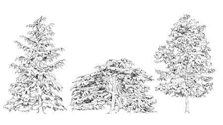 coniferous forest: Árboles, roble, abedul, abeto, pino. colección del bosquejo Vectores