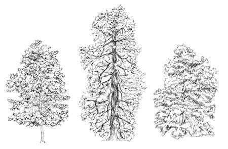 fir trees: Trees, Oak, birch, fir, pine. Sketch collection
