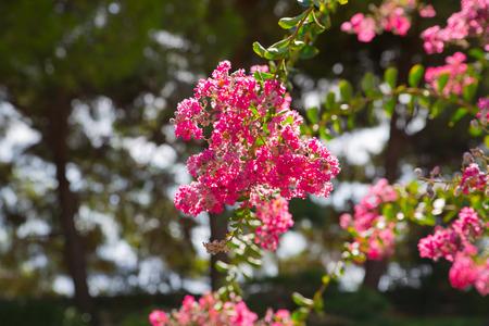 Flower in the Japanese Garden, Monaco