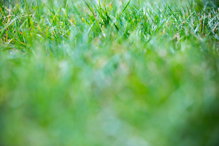 Green grass, Image for background Imagens