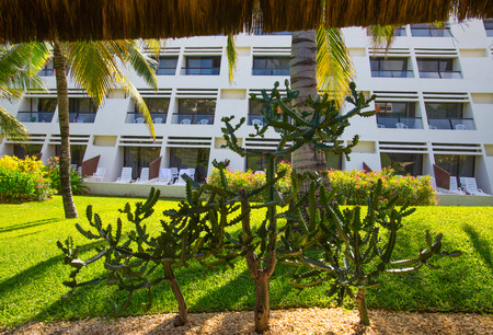 Mexico, Cancun - February 15, 2018: Park with palms and tropical plants