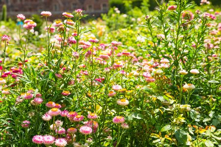 English nature, flowers and plants. English garden.