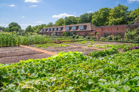 London, UK - July 29, 2019:  Inner yard of the kitchen garden in  Hampton court. Historical place going back to Tudors time locates in West London