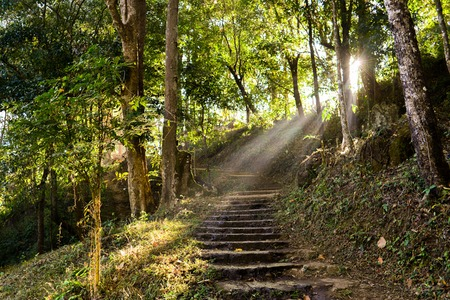 walking paths: Walking paths in the forest Stock Photo