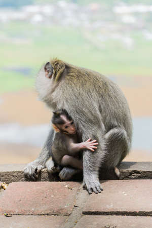 A mother monkey holding her cute baby