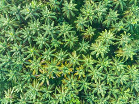 Aerial view of palm oil tree. Banco de Imagens