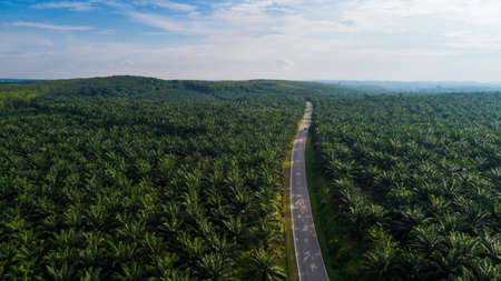 Aerial view of a road and palm oil during sunny day.