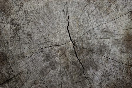 Cracked wood textures, close up.