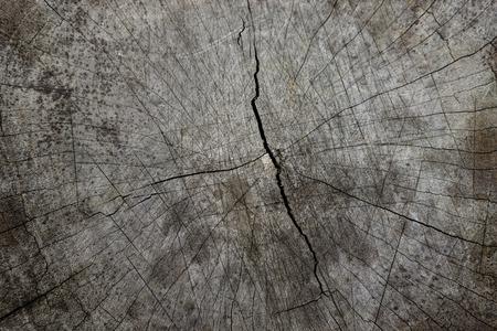 Textures de bois fissuré, gros plan. Banque d'images