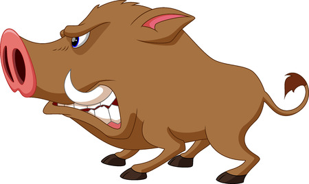 wild nature: Wild boar cartoon angry