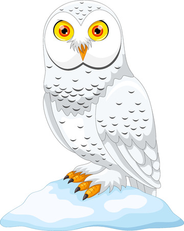 Cartoon Illustration of Arctic owl isolated on white background