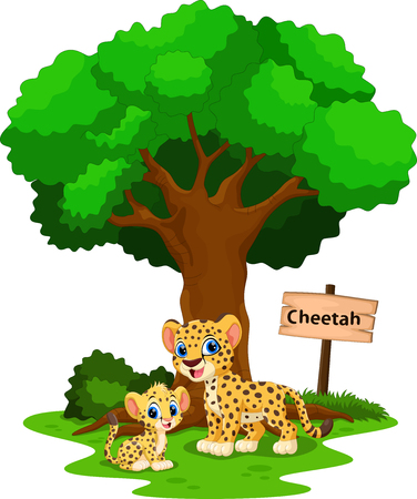 Funny cheetah under a shady tree with a sign the identity