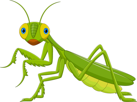 Vector illustration of Cute grasshopper cartoon - Green Mantis