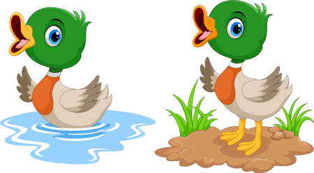 Cute duck cartoon