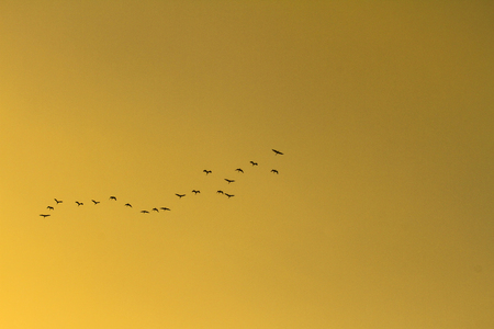 a folks of birds on yellow sky background Banco de Imagens