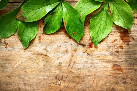 Green leaves on wooden background Stock Photo - 16776493