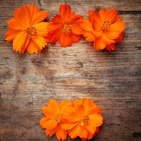 Orange flowers on wooden background Stock Photo