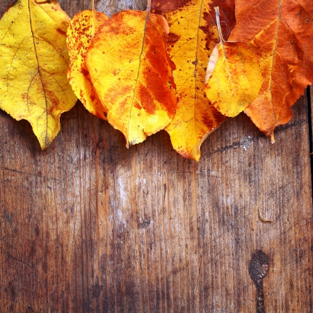 Yellow autumn leaves on wooden background Stock Photo - 16776435