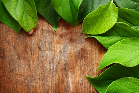 Green leaves on wooden background Stock Photo - 16776453