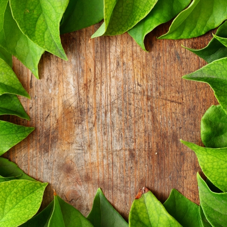 Green leaves on wooden background Stock Photo - 16776464