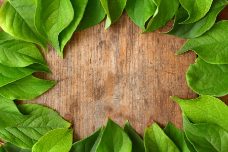 Green leaves on wooden background Stock Photo - 16776451