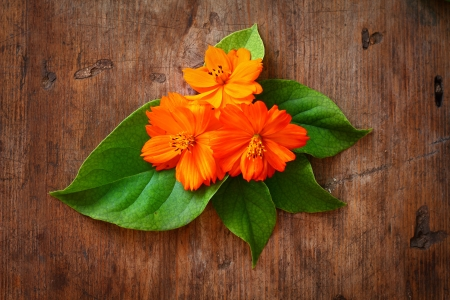 Green leaves and orange flower on wooden background