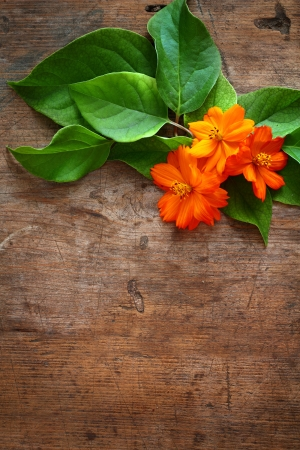 Green leaves and orange flower on wooden background Stock Photo - 16776461