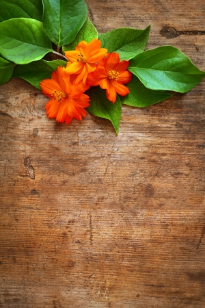 Green leaves and orange flower on wooden background Stock Photo - 16776454