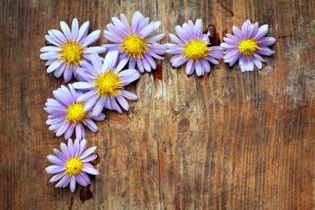 Purple flowers on wooden background Stock Photo - 16776434