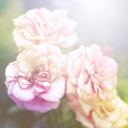Floral background Stock Photo - 16775747