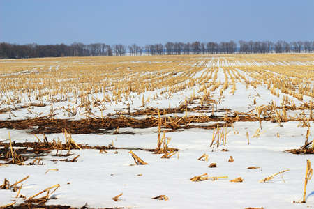 Agriculture field covered with snow