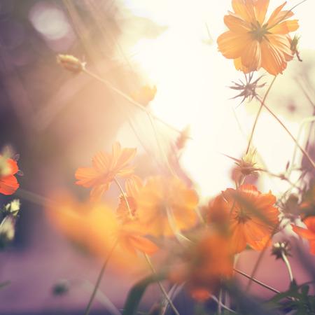 petites fleurs: Floral background