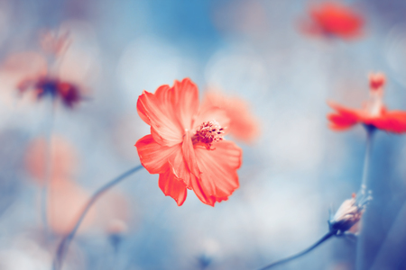 unfold: Floral background with small red blossoming flower. Color toning applied.