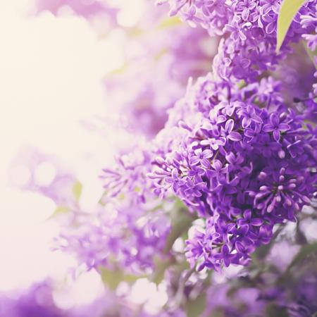 Uas Color Pastel Stunning Uas Decoradas Color Claro Flores Pequeas - Color-lila-pastel