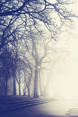 filtered: Weather fog in the park. Color filtered image.