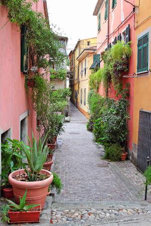 sarzana: Old narrow street decorated with green plants, Sarzana, Italy.