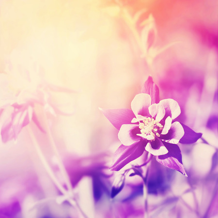 filtered: Floral background with tiny flower. Filtered image. Stock Photo