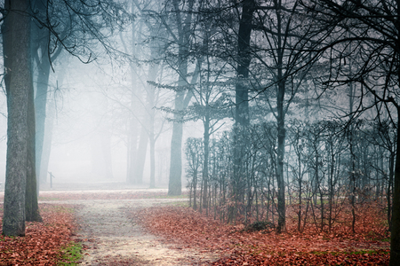 ducale: Mist in empty park in autumn. Ducale park in Parma, Italy.