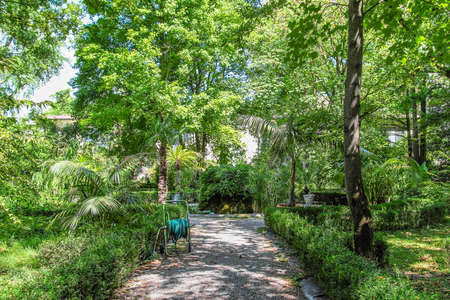 plants and trees: PARMA, ITALY - AUGUST 04, 2015: Old historical botanical garden in Parma, Italy. The garden was founded in 1768 by G.B. Guatteri.