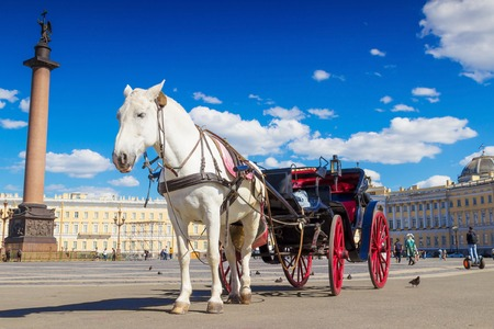 SAINT PETERSBURG, RUSSIA - MAY 25, 2015: White horse and open coach on Palace square in sunny day in Saint Petersburg, Russia.