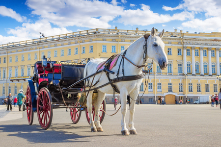 SAINT PETERSBURG, RUSSIA - MAY 25, 2015: White horse and vintage carriage on Palace square in Saint Petersburg, Russia.
